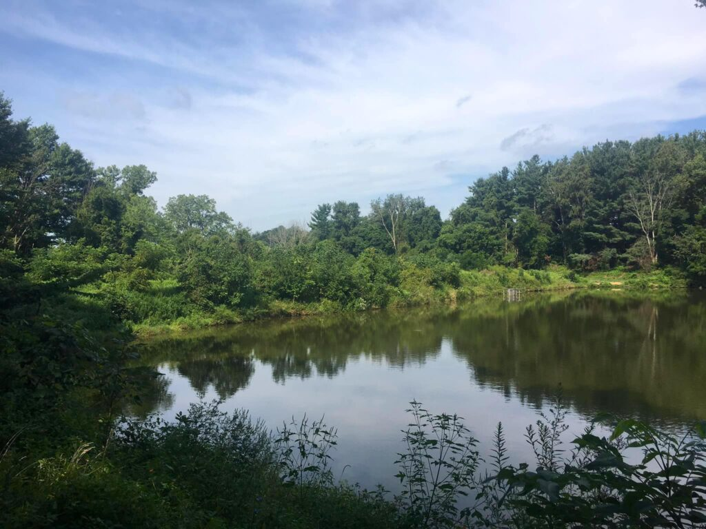 A quiet lake with trees lining it makes for some of the best fishing in Ohio.