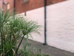white brick wall with plant in the foreground