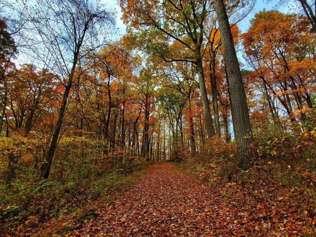Beautiful fall foliage in Ohio.